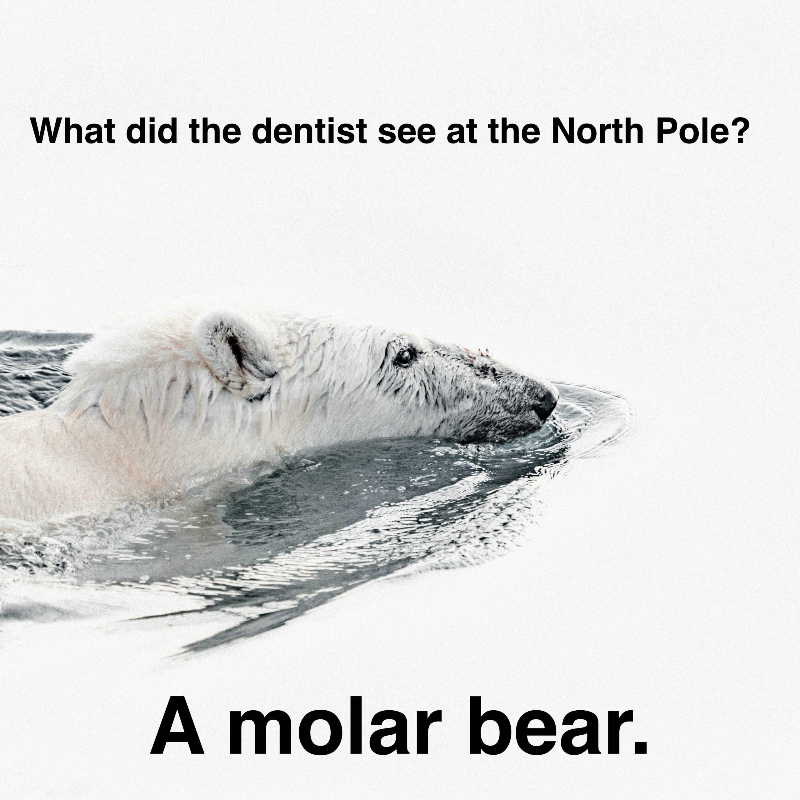 dentist molar bear pun