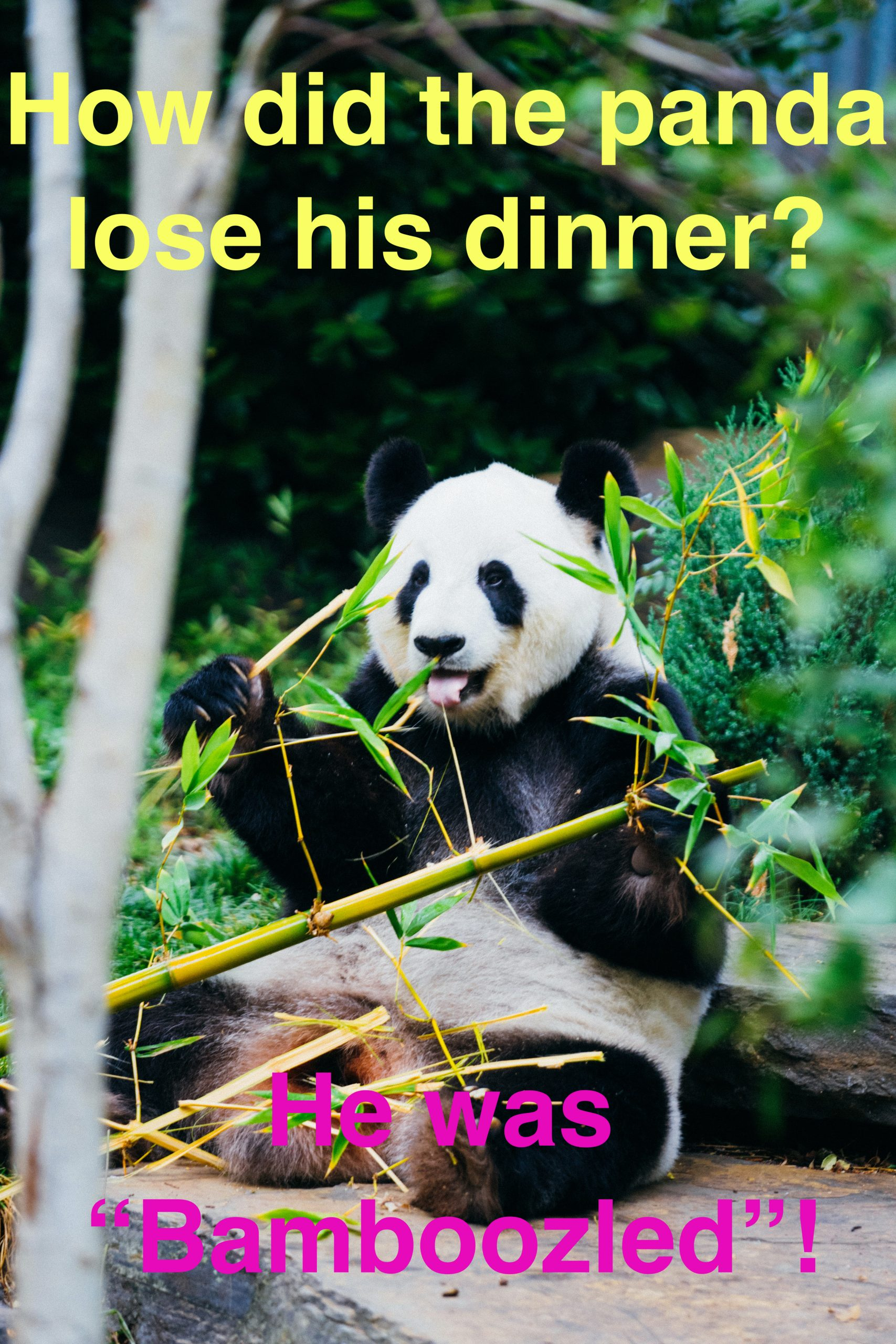 "How did the panda lose his dinner? He was  ""Bamboozled""!"